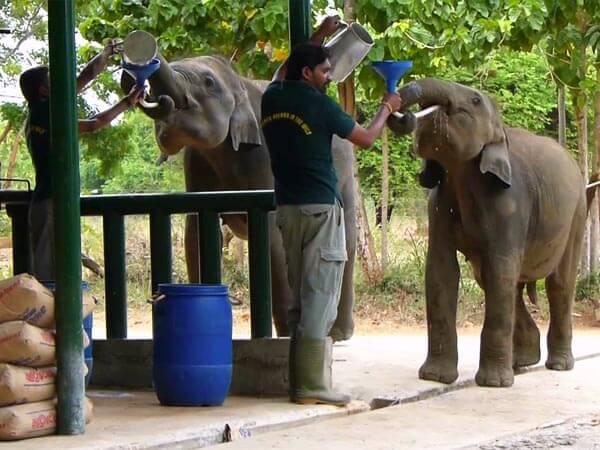 Elefantenwaisenhauses