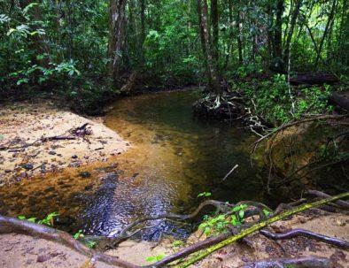 Kurze Wandertour Sri Lanka
